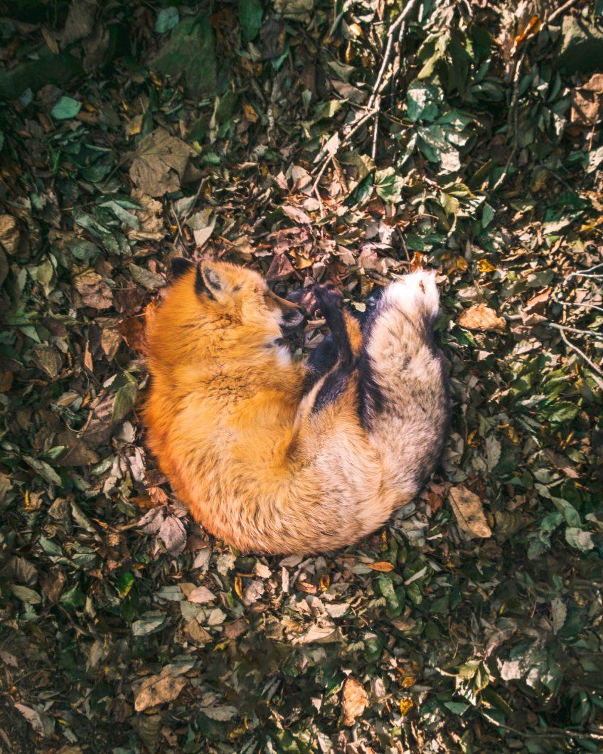 Sleeping Fox Village - Miyagi, Japan